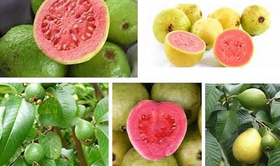 manfaat buah jambu biji merah