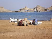 верблюд на пляже Египта