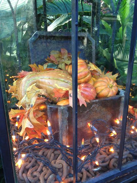 "<Img src = ""07/12/13-3.jpg"" alt = ""planta, conservatorio plantas, chicago"">"