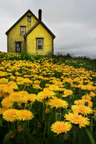 Dandelion House, Nova Scotia, Travel, Photo Blog, Pinterest