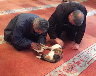foto kucing di dalam masjid 03