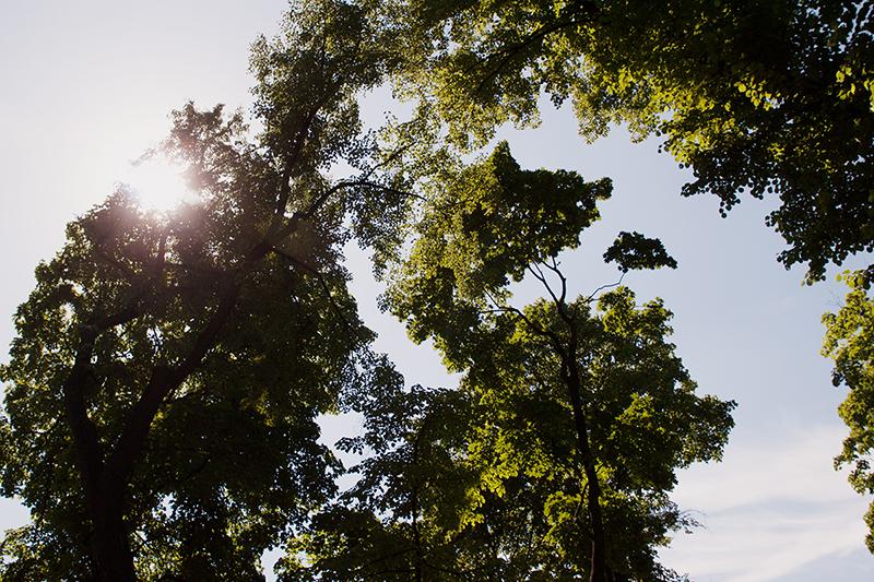 trees sunshine Санкт-Петербург солнечный свет сквозь деревья