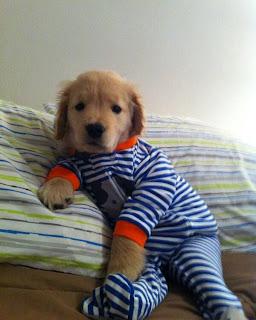 Hund Schlafazug