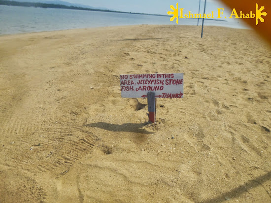 Beware of the jellyfish in Luli Island, Honda Bay
