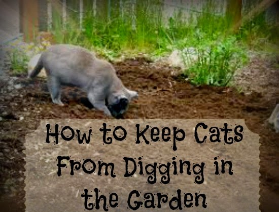 Greneaux Gardens Easy Way To Keep Cats From Digging Up Your Plants