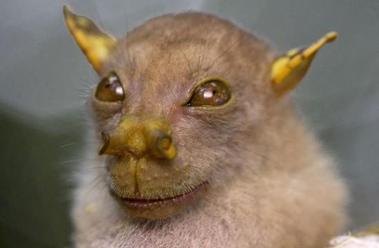 Los animales mas extraños del mundo