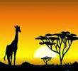 Safari schaduw