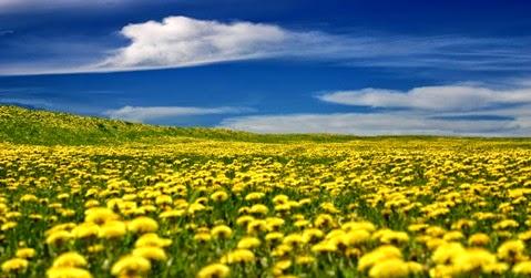 стихи про желтый одуванчик детские