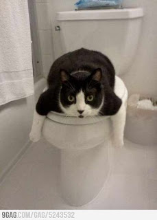 lol Meme cat in toilet