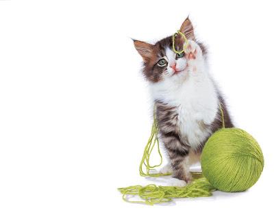 funny cat-13