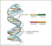Nucleic Acids Structure