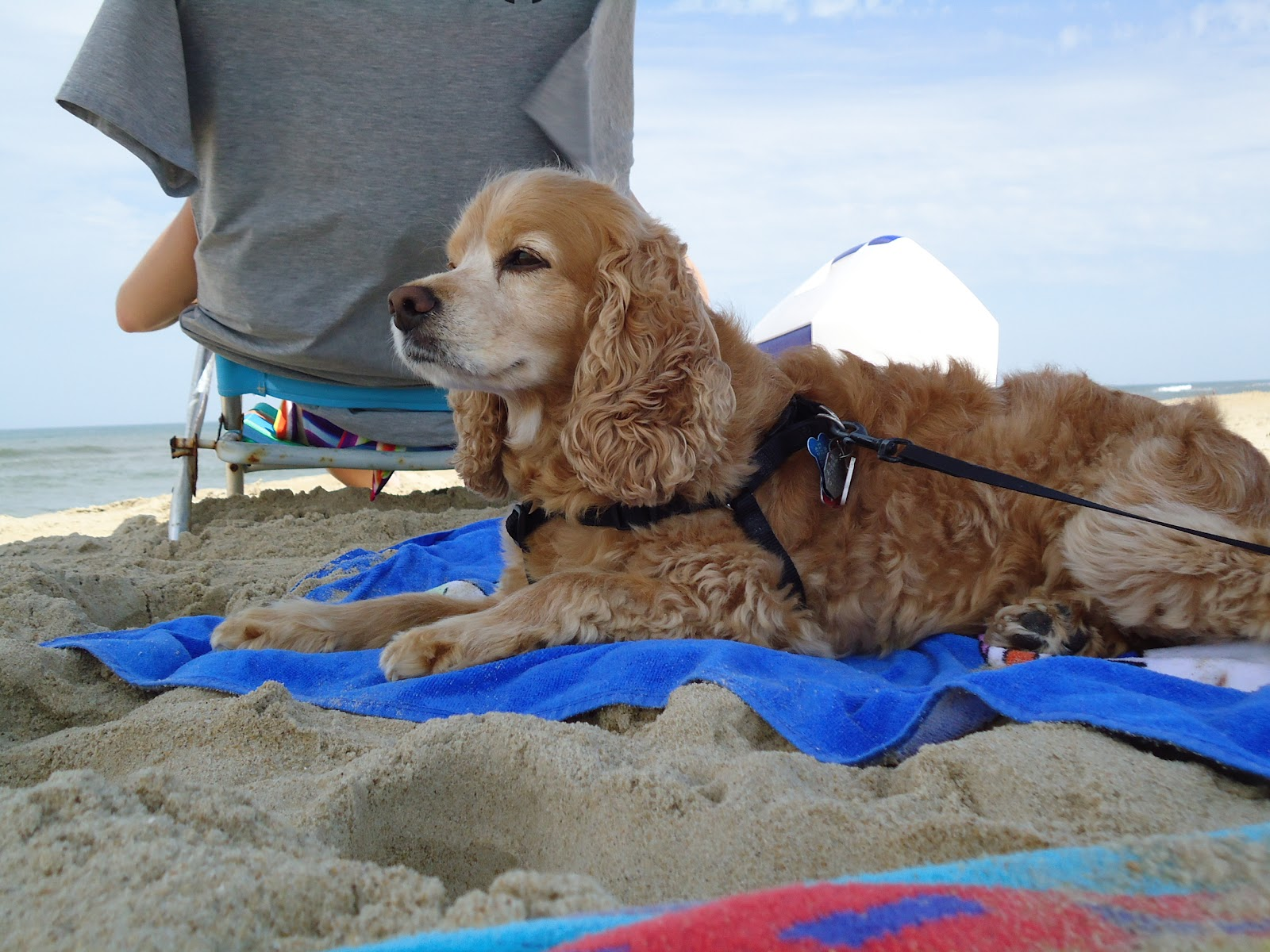 Outer Banks dog