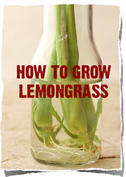 health benefits of lemongrass