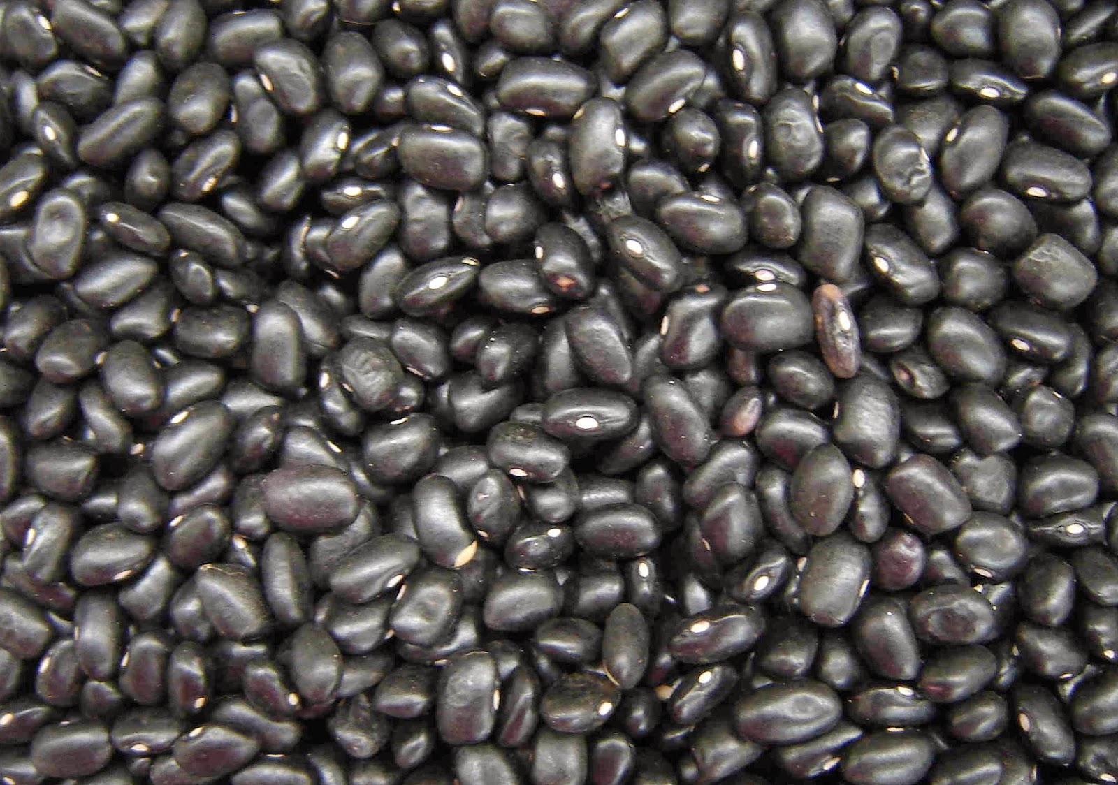 refried-black-beans-from-scratch