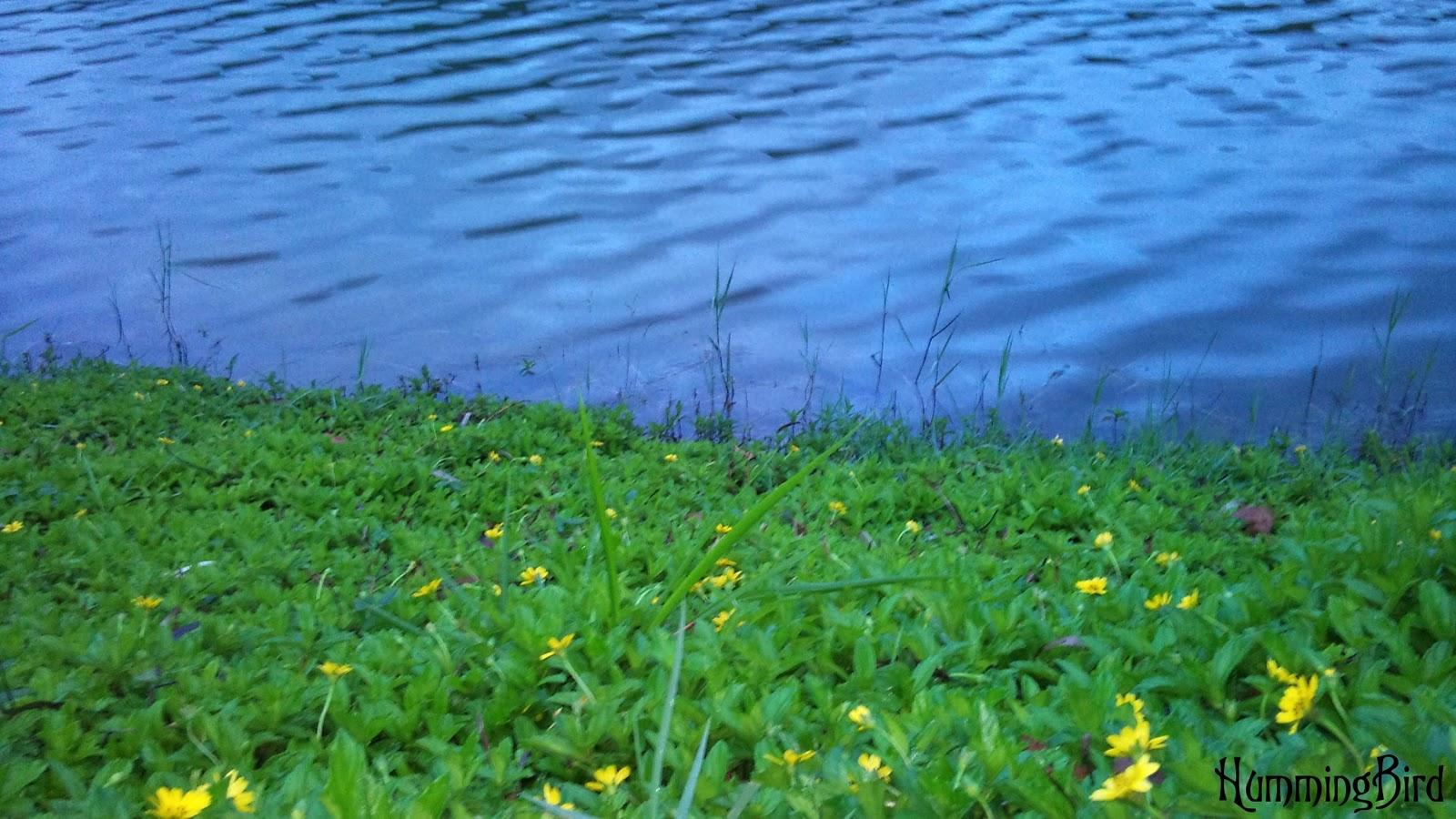Matale Sri Lanka  city images : Sembuwatta Lake,Matale,Sri Lanka | Beautiful Sri Lanka