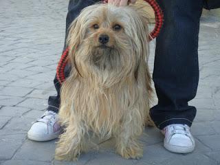 Adopta Peludos Perros Y Gatos En Adopcion Adoptados Zipi Zape
