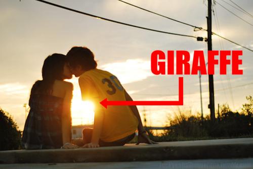 Girafa entre dois namorados.
