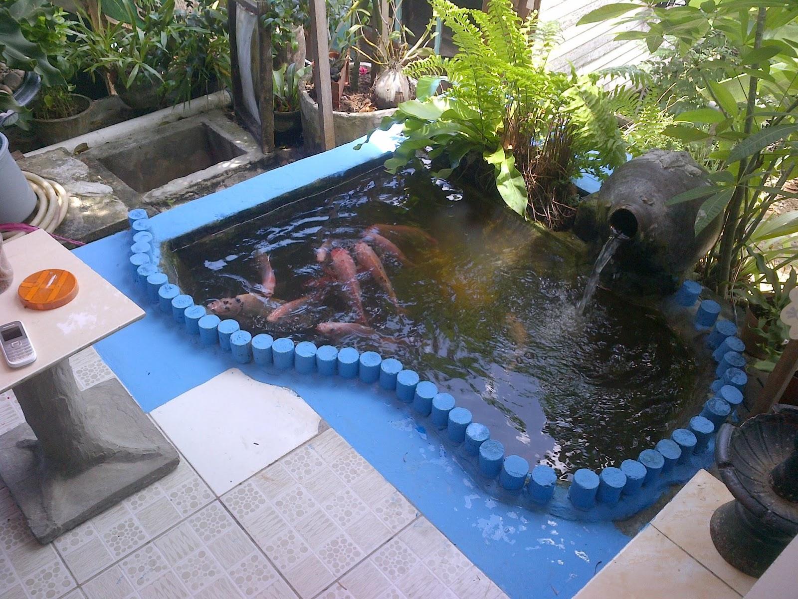 raka manto membuat kolam ikan hias di rumah sendiri