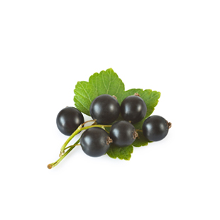 Organic Black Currant (Blackcurrant) Extract