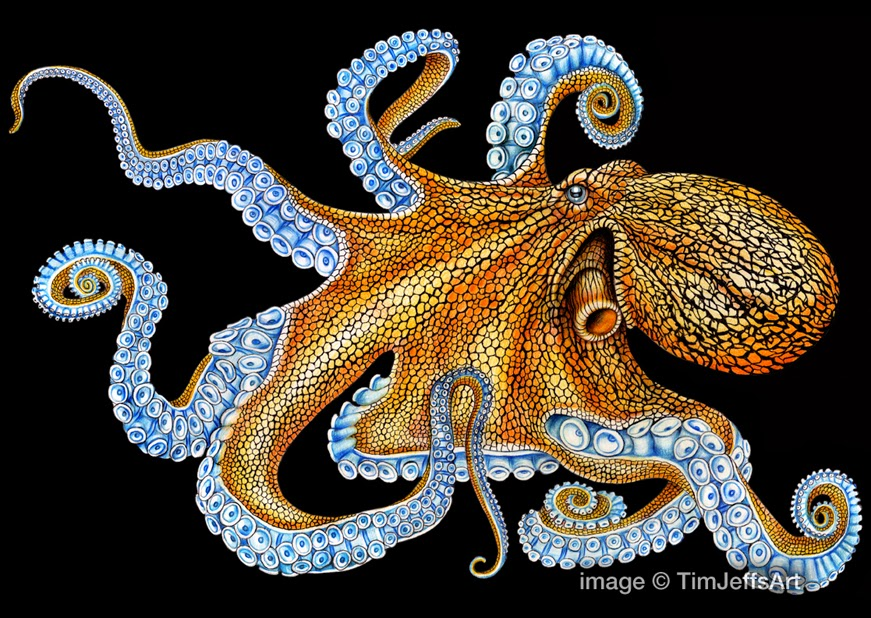 Tim jeffs art for Colorful octopus painting