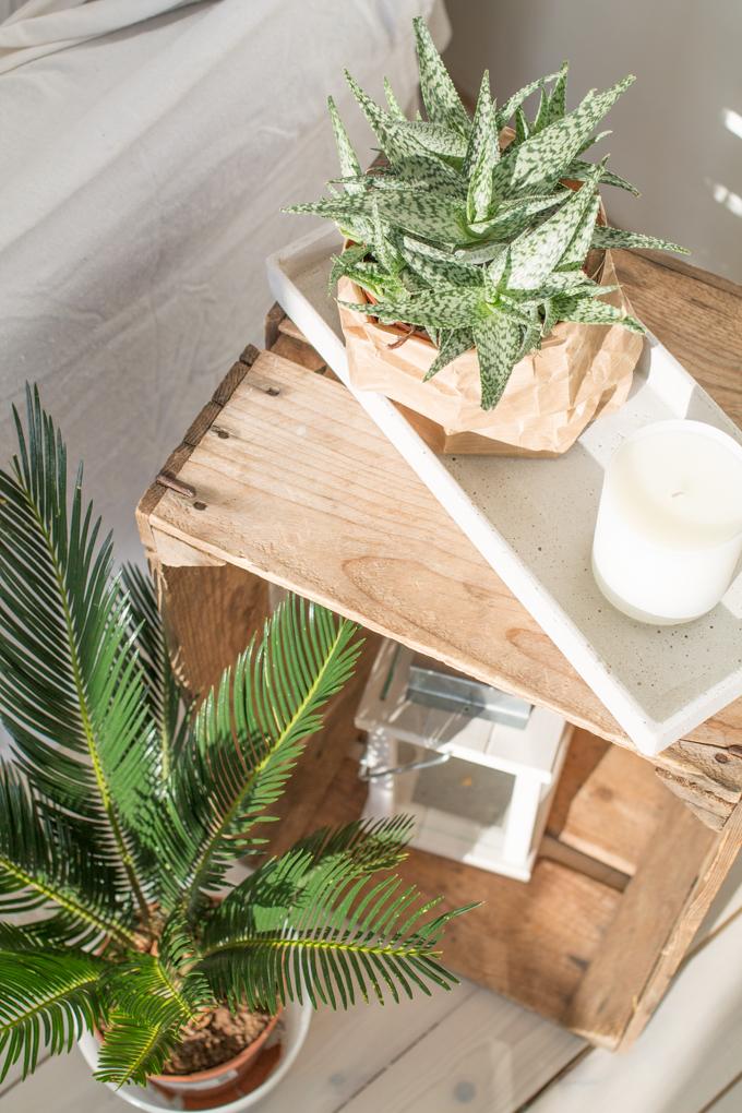 viherkasvit sisustuksessa aloe vanha puulaatikko