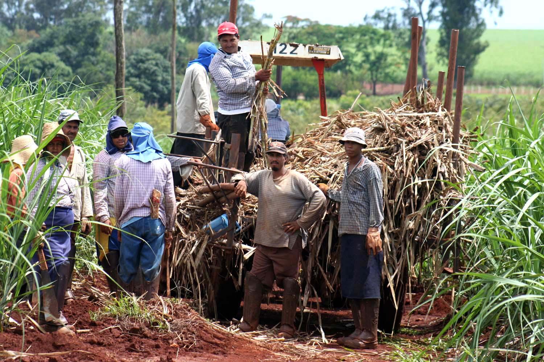 Circuito Productivo De La Caña De Azucar : Planeta variadista: proceso industrial del azúcar de caña
