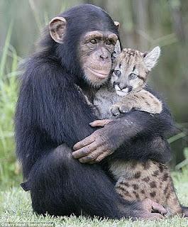 კეთილი მაიმუნი