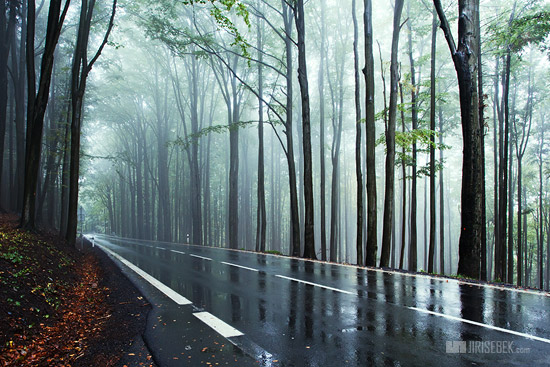 Beautiful Rain And Fog Wallpapers Images Pictures Season Scenes