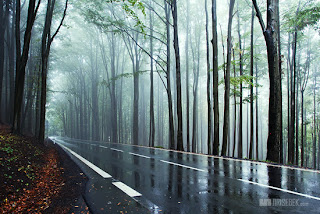 beautiful rain and fog wallpapers, images, pictures, season, scenes