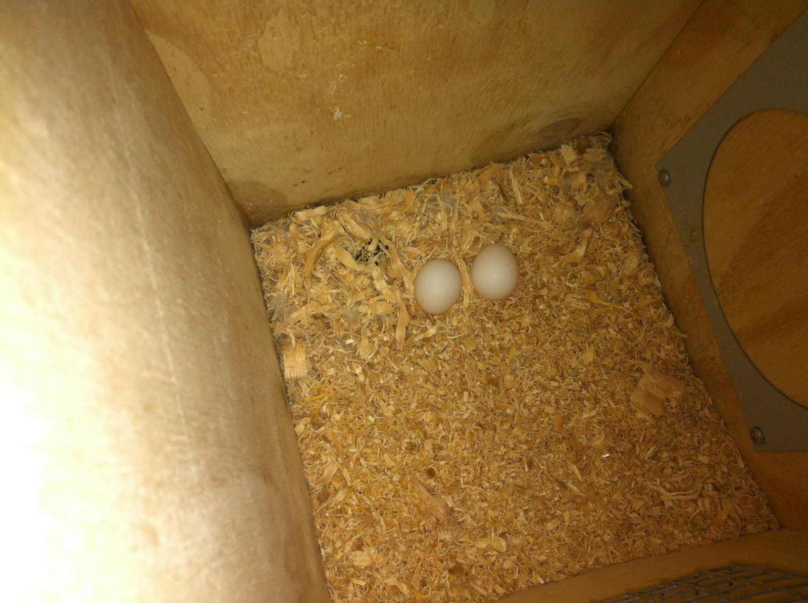 Breeding Box Breeding Boxes / Nesting Boxes