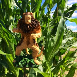 Escobar Farm RI_ Cowardly Lion Wizard of Oz Corn Maze Barn_New England Fall Events