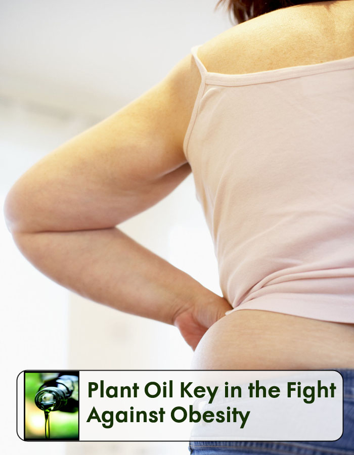 Plant Oil Key in the Fight Against Obesity