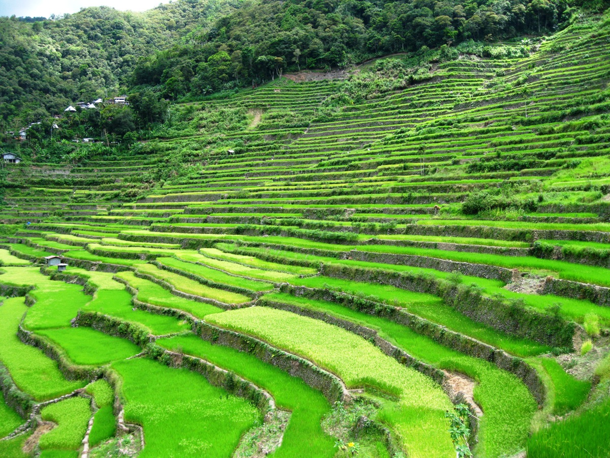 The viewing deck journeying batad rice terraces and for What are terraces