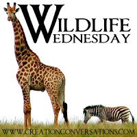 Wednesday~