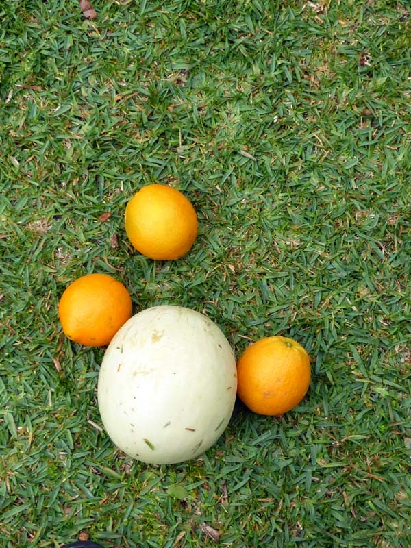 Three oranges and a honeydew on the grass at Feed the Weed