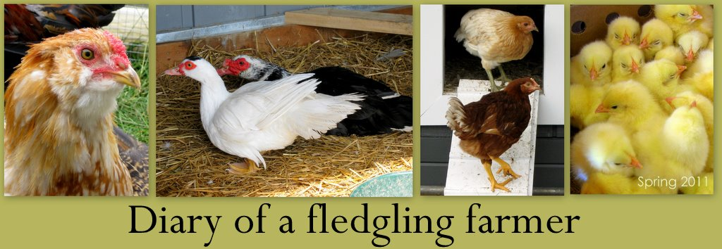 Diary of a fledgling farmer