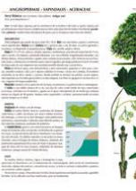 Guía de Árboles de Euskal Herria - Promociones Deia