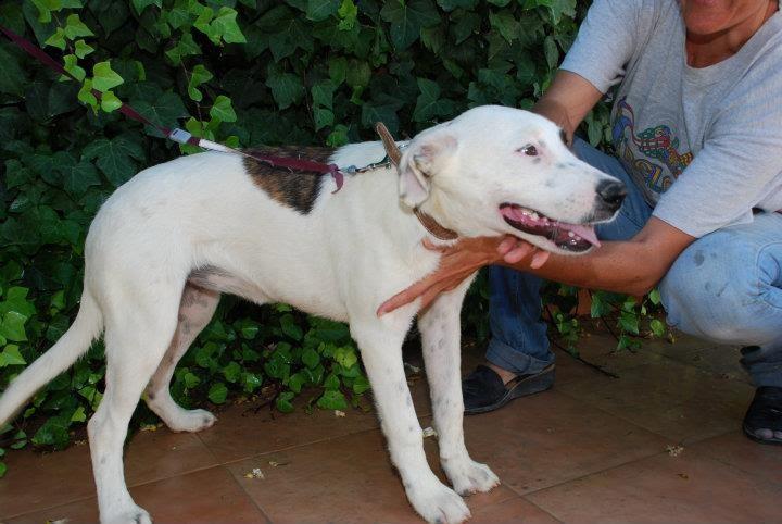 áspero perra facial en Albacete