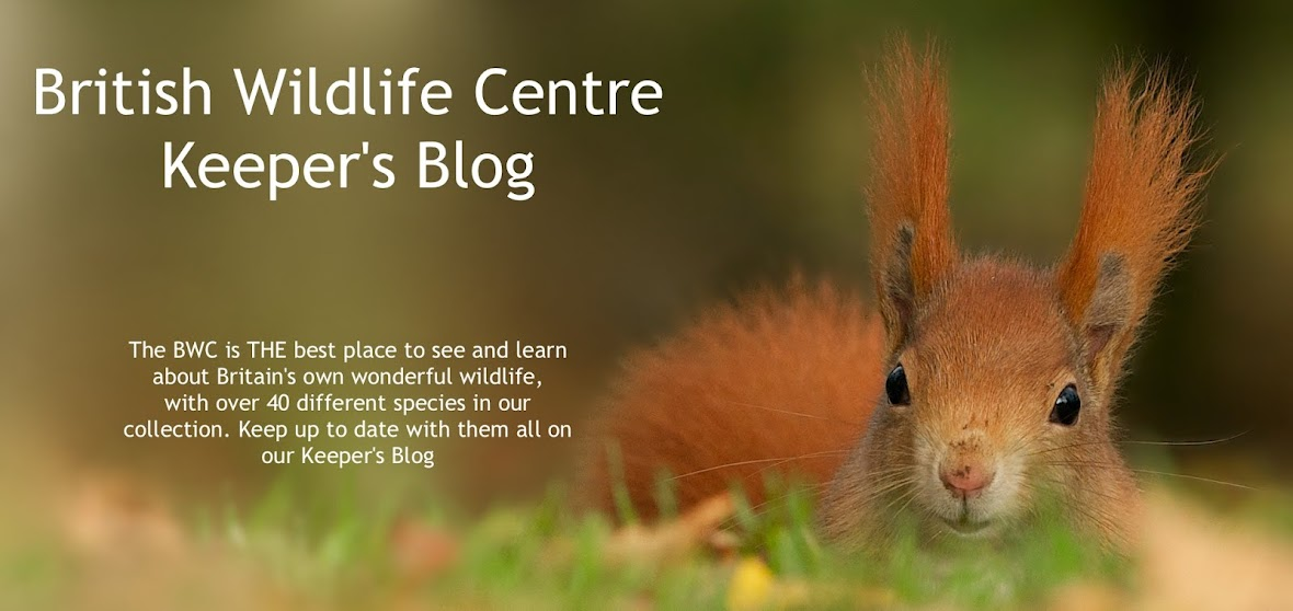 British Wildlife Centre ~ Keeper's Blog