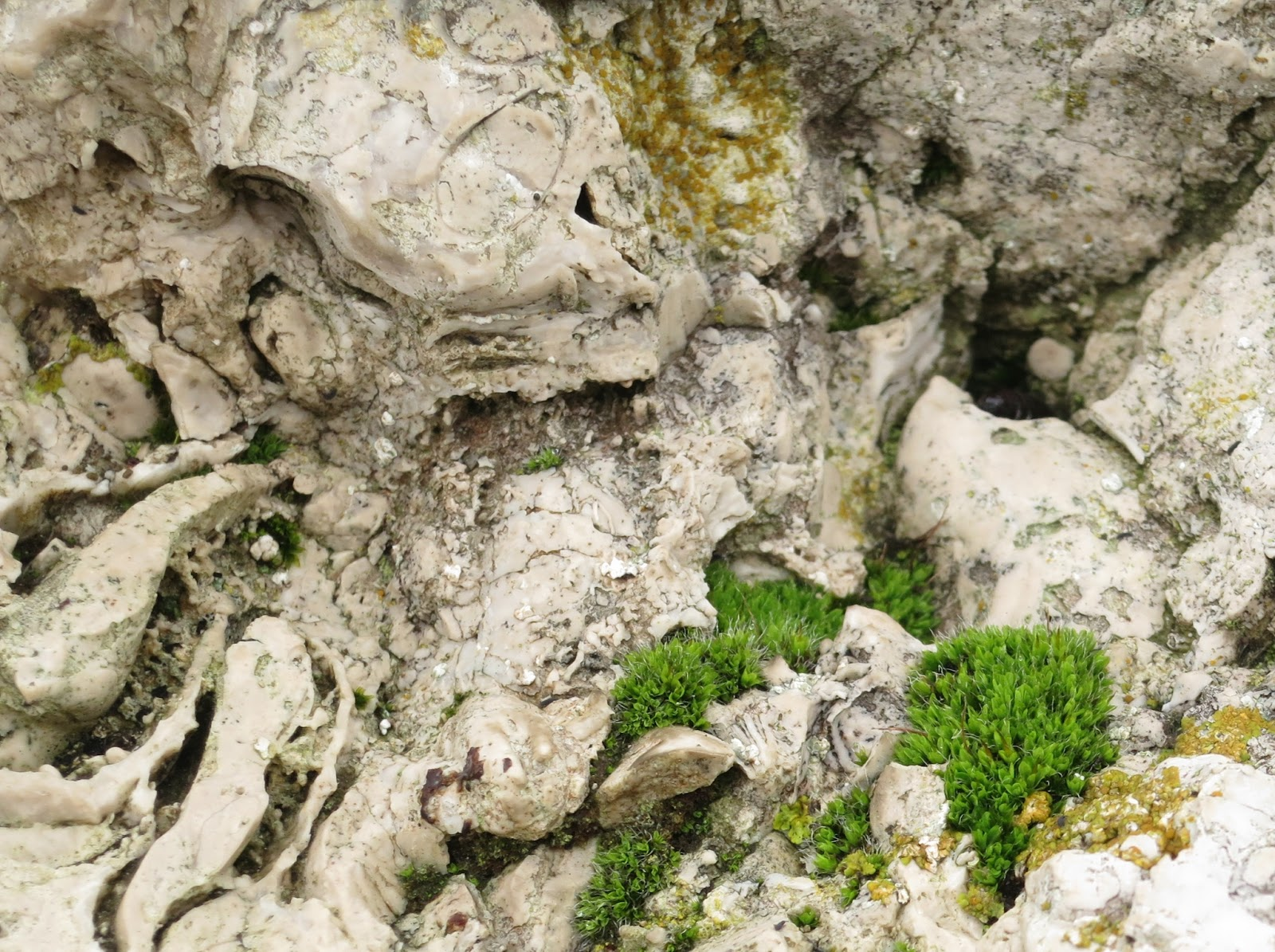 Clumps of short, small, bright green plants on swirls of grey and white rocks.