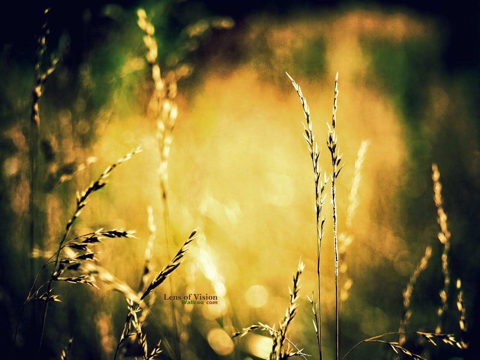 Digital photography wallcoo 5D wild grass