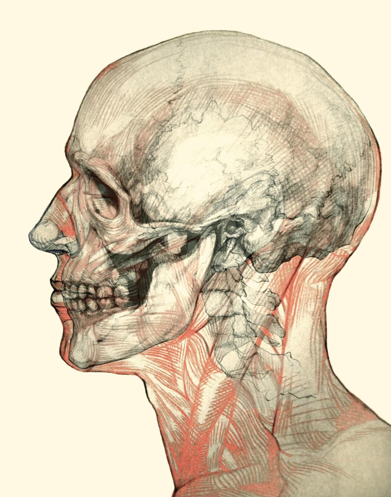 José Manuel Martínez Pérez Escultor: Anatomía de la cabeza.