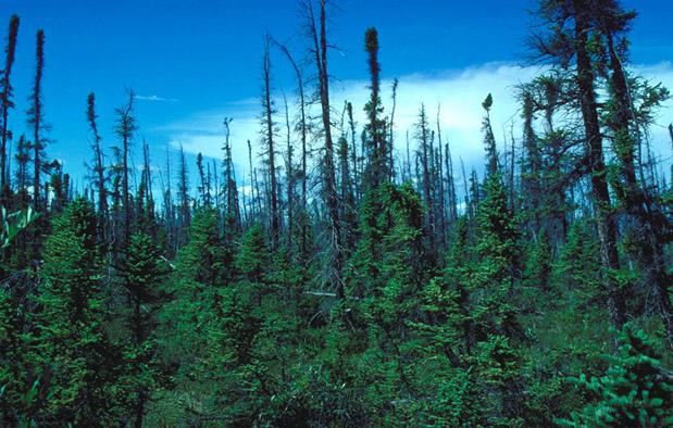Bioma taiga gugur Ekosistem Darat