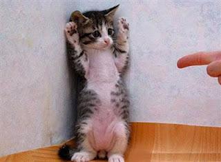 Gato castigado