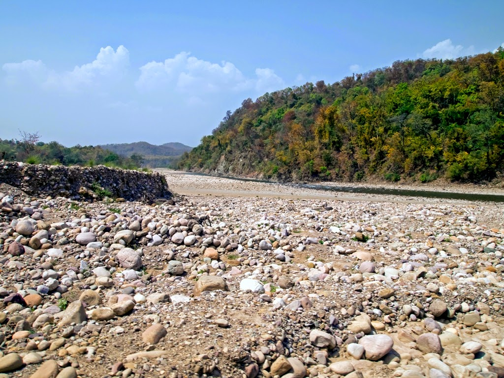 Ramganga river in Jim Corbett National Park