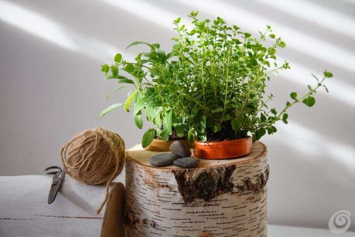 Piante aromatiche sempre a portata di mano sul vostro - Erbe aromatiche in casa ...