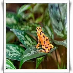 Semaphores-Frog