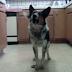 Perro causa revuelo en las redes sociales