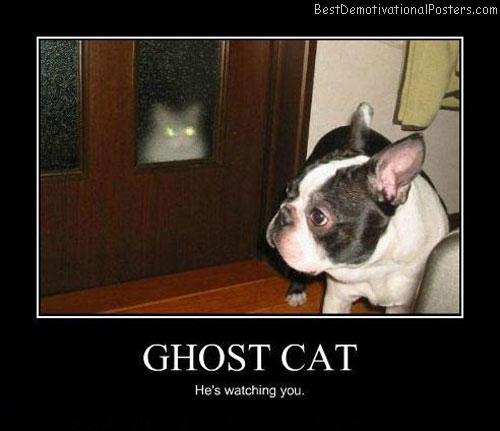 Cat And Dog Can See Ghost