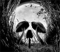Iluzie de craniu